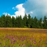 Jizerské hory v létě, autor: Adam Wójcik